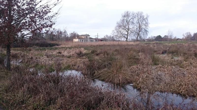 C.R des marais de Bruges Marais12
