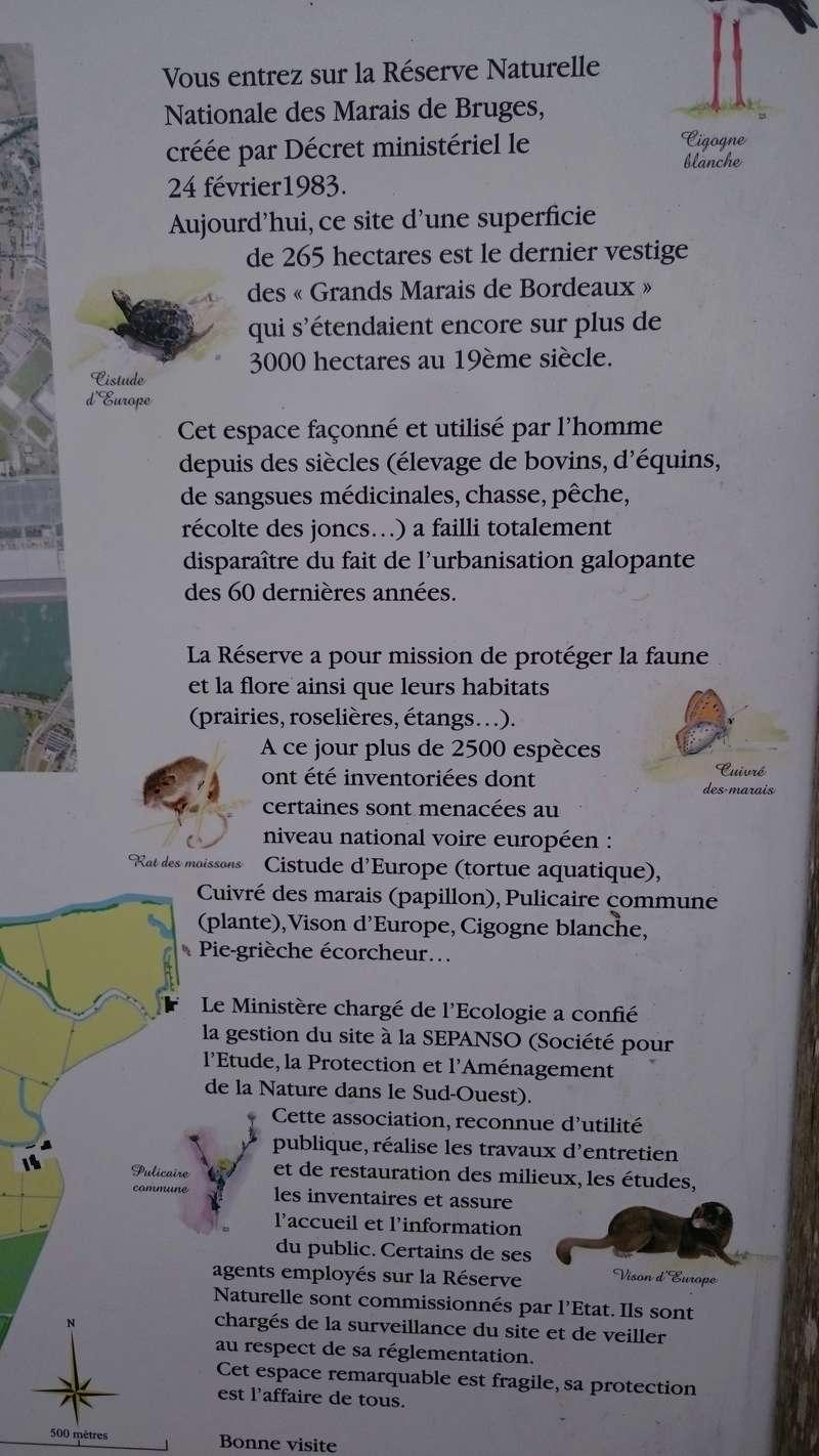 C.R des marais de Bruges Marais14