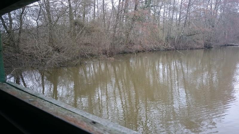 C.R des marais de Bruges Marais16