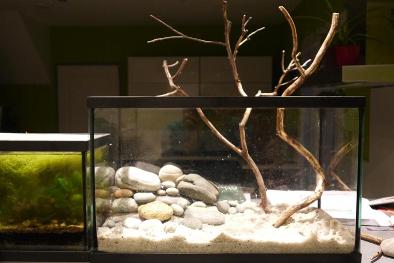 Aquarium ouvert low-tech 40 litres P1110710