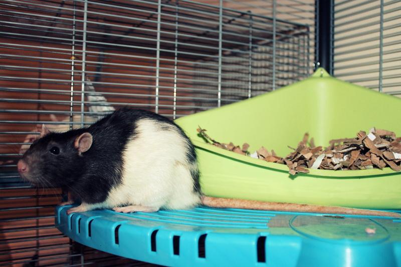 Les rats de Skip' - Page 3 Img_0110