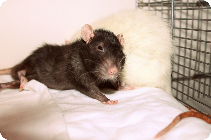 Les rats de Skip' - Page 3 Img_0114
