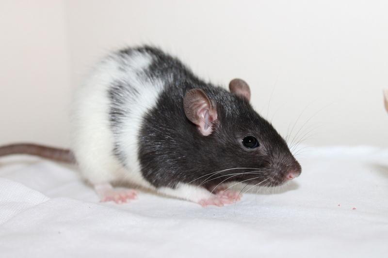 Les rats de Skip' - Page 3 Img_0115