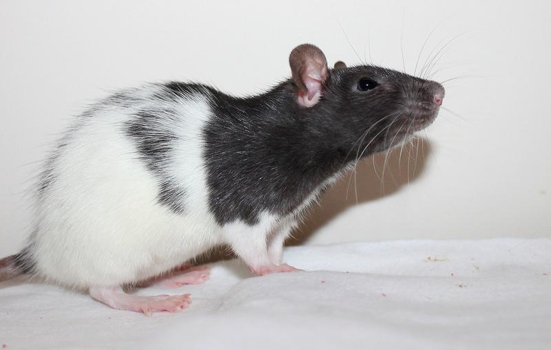 Les rats de Skip' - Page 3 Img_0116