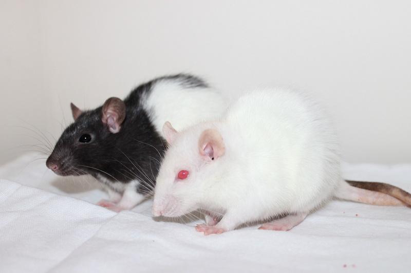 Les rats de Skip' - Page 3 Img_0117