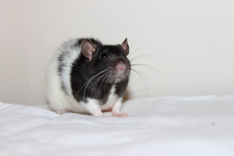 Les rats de Skip' - Page 3 Img_0118