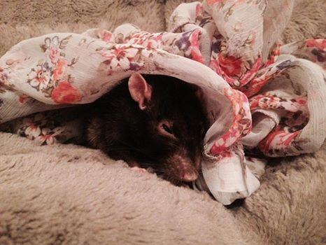 Les rats de Skip' - Page 3 Pypy10