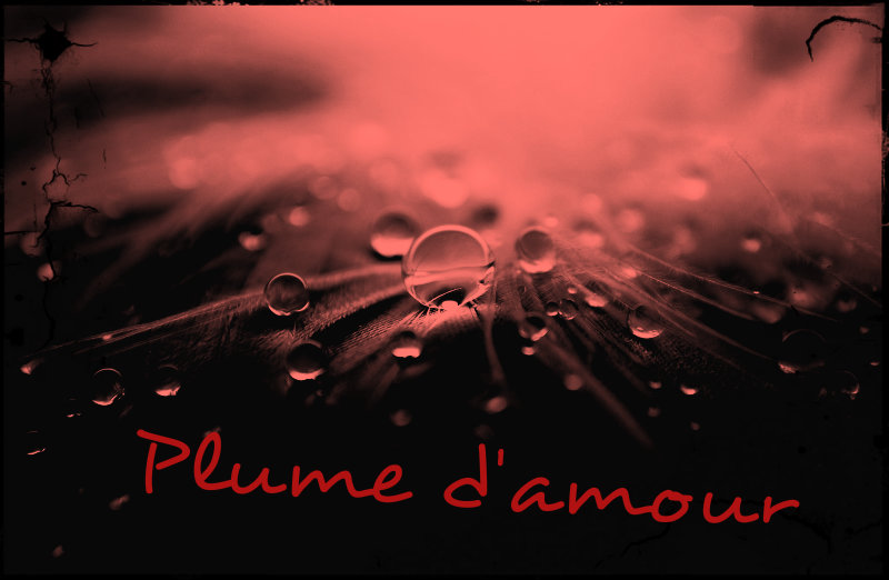 Plume d'amour