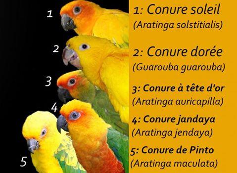 Fiches pratiques sur les oiseaux! 12523910