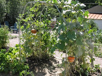 Good pictures of a vertical pumpkin patch? Turban10