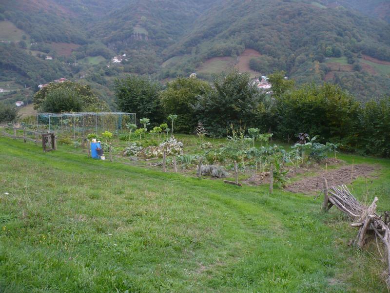 jardin d'arrière saison P1060714