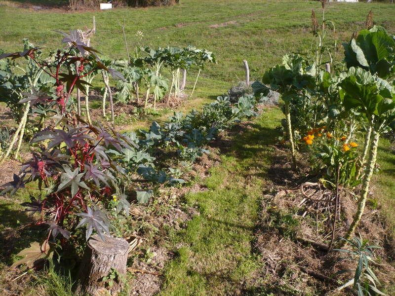 jardin d'arrière saison P1060717