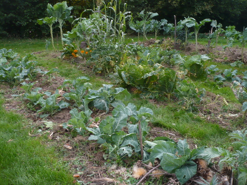 jardin d'arrière saison P1060718
