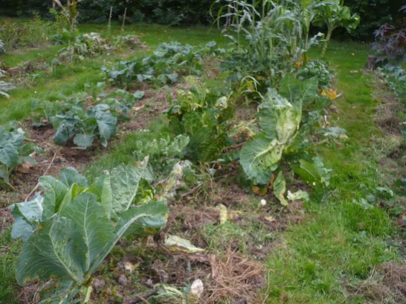 jardin d'arrière saison P1060719