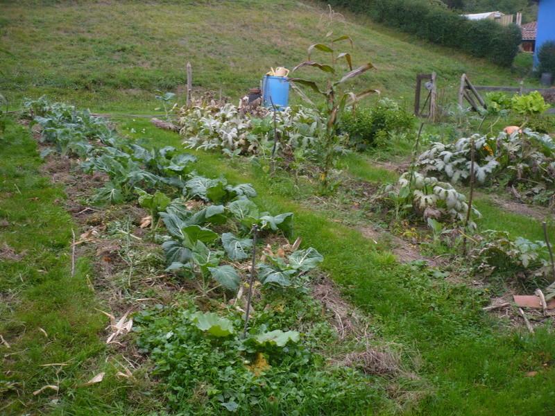 jardin d'arrière saison P1060720