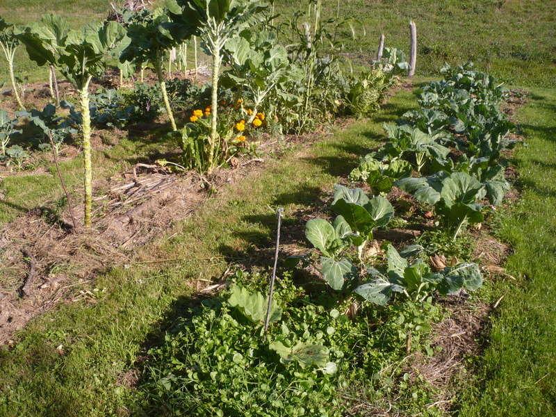 jardin d'arrière saison P1060721