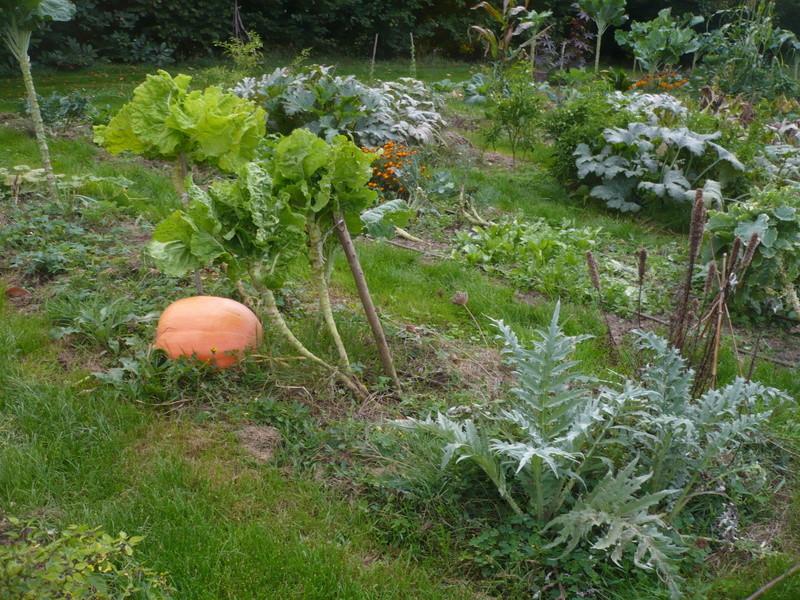 jardin d'arrière saison P1060724
