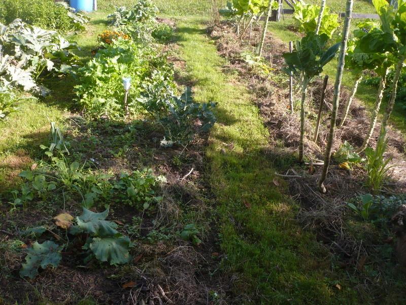 jardin d'arrière saison P1060725