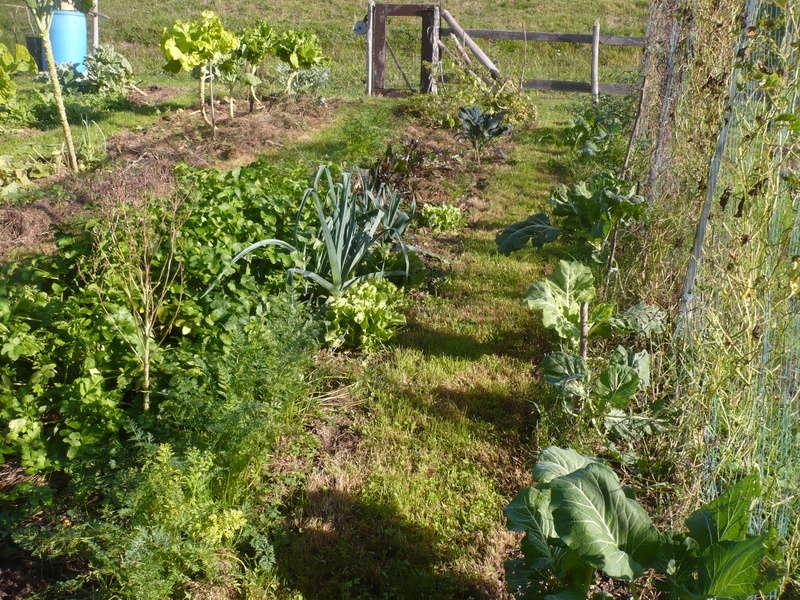 jardin d'arrière saison P1060726