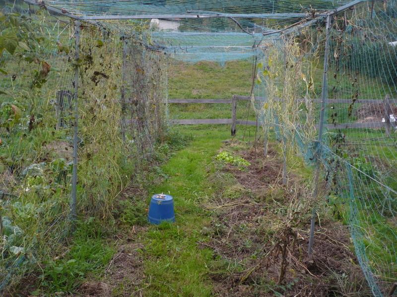 jardin d'arrière saison P1060727