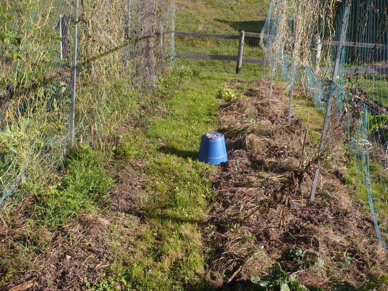 jardin d'arrière saison P1060729