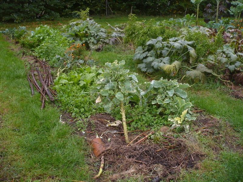 jardin d'arrière saison P1060731