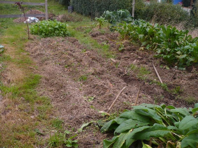 jardin d'arrière saison P1060733