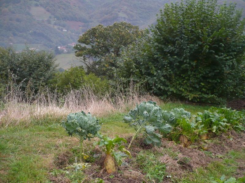 jardin d'arrière saison P1060735
