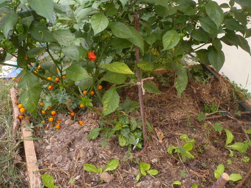 jardin d'arrière saison P1060737