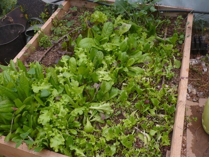 jardin d'arrière saison P1060741