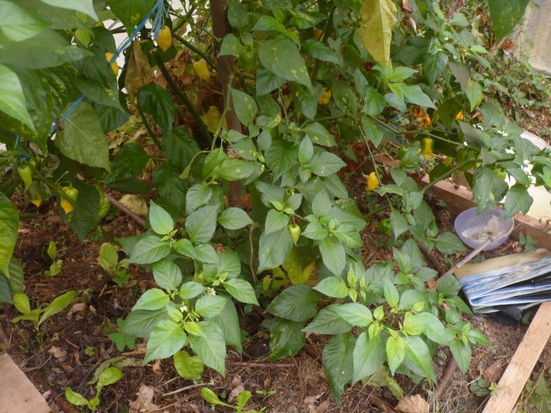 jardin d'arrière saison P1060742