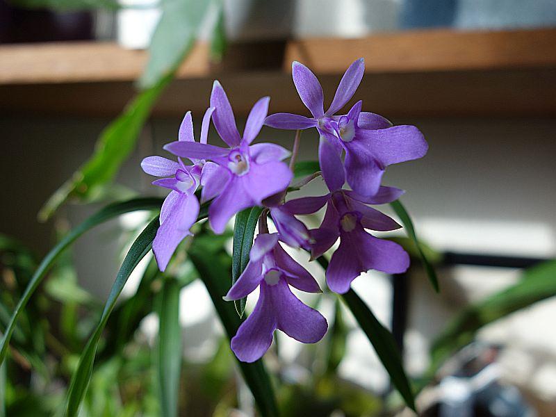 Orchideen 2 (fortlaufende Seiten 200 bis 300) - Seite 51 Dsc05230