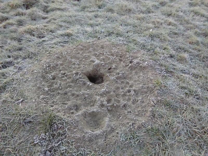 Enfin de retour à mon tas de sable Img_2013