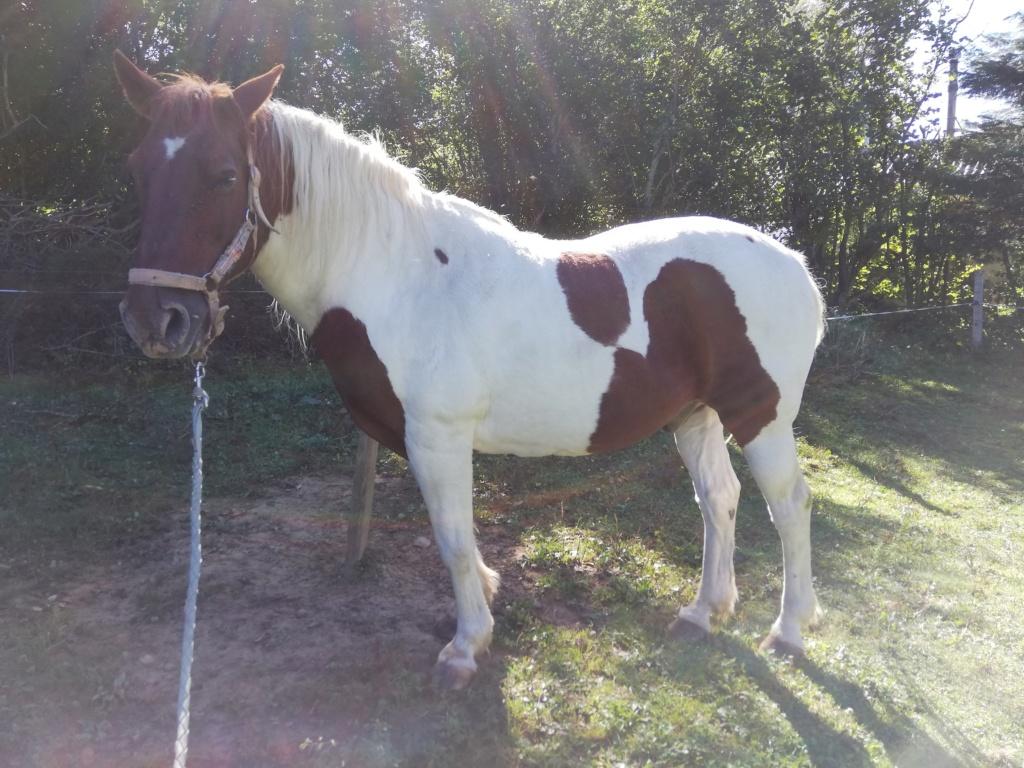 CALINOU  - ONC poney - né en 1999 - adopté en novembre 2012 par Stéphanie - Page 7 1513