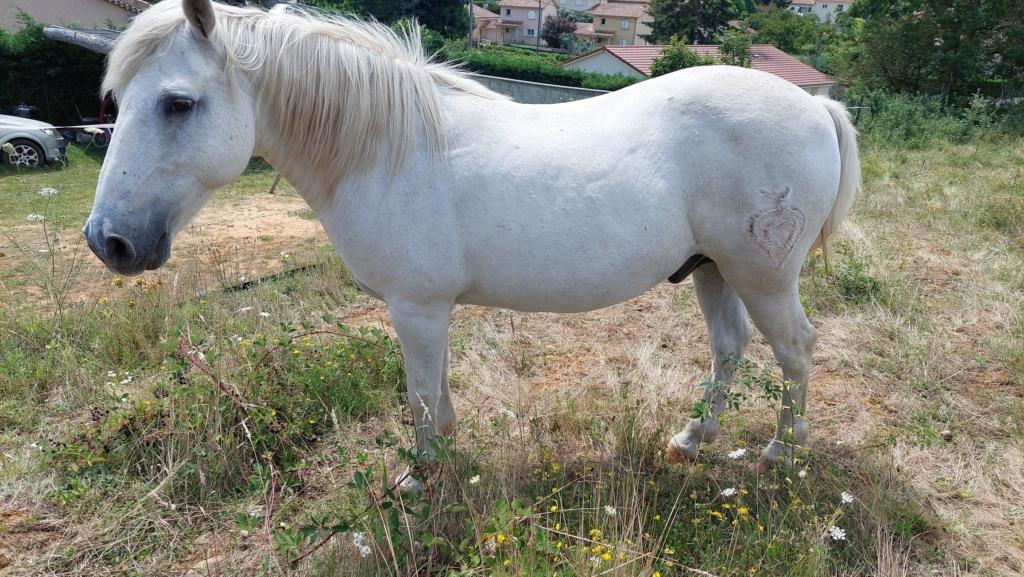OSCO - Camargue PP né en 2002 - Adopté en mars 2012 par Anaïs  20210740