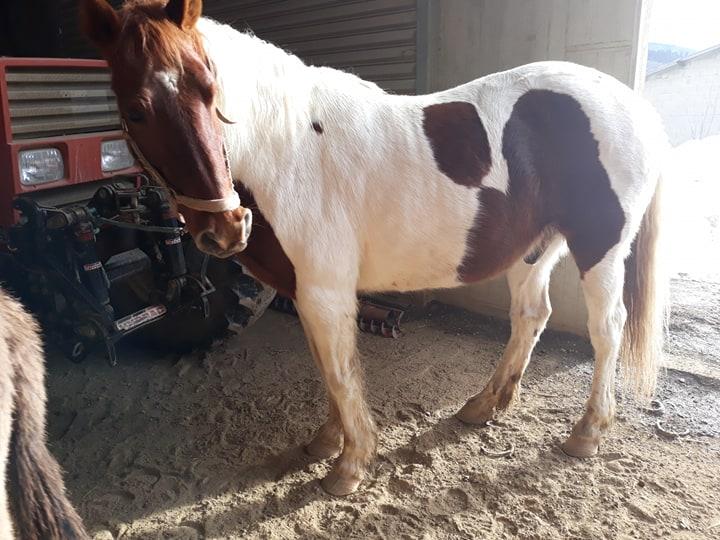 CALINOU  - ONC poney - né en 1999 - adopté en novembre 2012 par Stéphanie - Page 7 51589911
