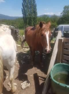 ROXANE - OI Poney née en 2000 - adoptée en décembre 2011 par Martine  5e5f9410