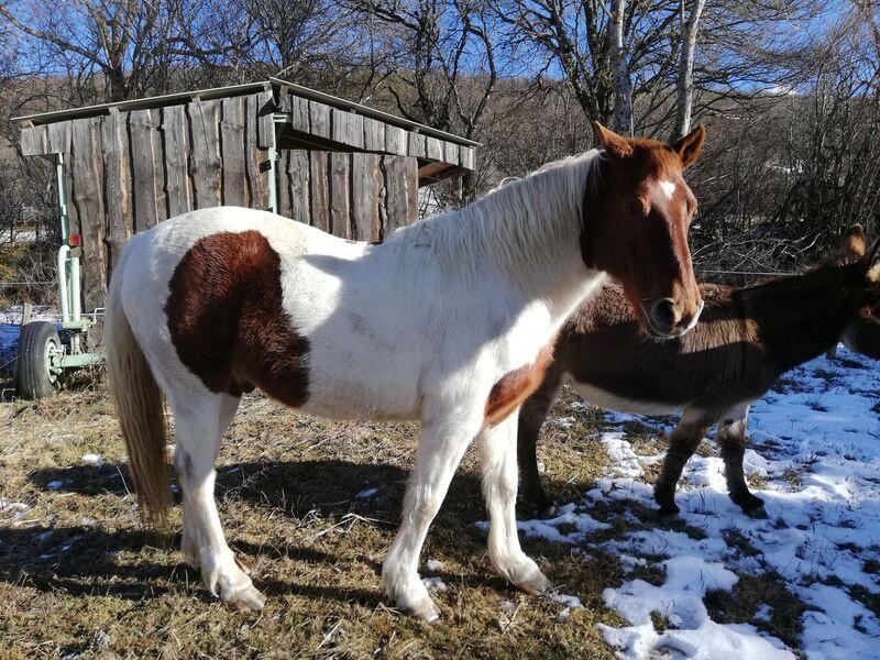 CALINOU  - ONC poney - né en 1999 - adopté en novembre 2012 par Stéphanie - Page 7 715