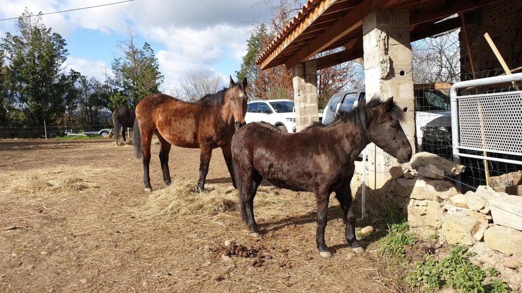 CHARLIE - ONC poney née en 1999 - adoptée en janvier 2013 par mammiemitsou - Page 3 C111