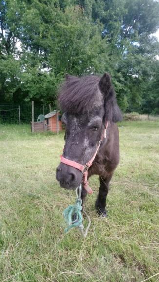 KIWI et CAPUCINE (décédée) - ONC poney présumées nées en 1990 - adoptées en octobre 2008 par caro38 - Page 3 Dsc_0424