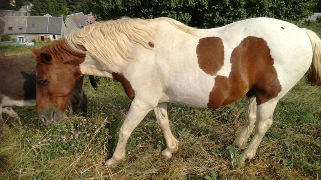 CALINOU  - ONC poney - né en 1999 - adopté en novembre 2012 par Stéphanie - Page 7 Img_2016