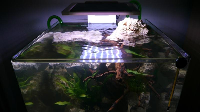 60l - lagune eau saumâtre  P1070812