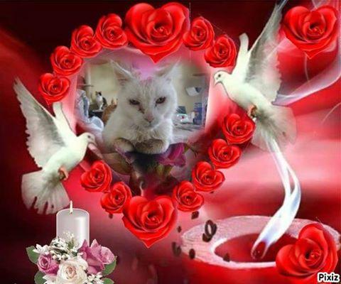 Les Griffes du Coeur Emmanuelle et ses minous  76 - Page 2 14639710