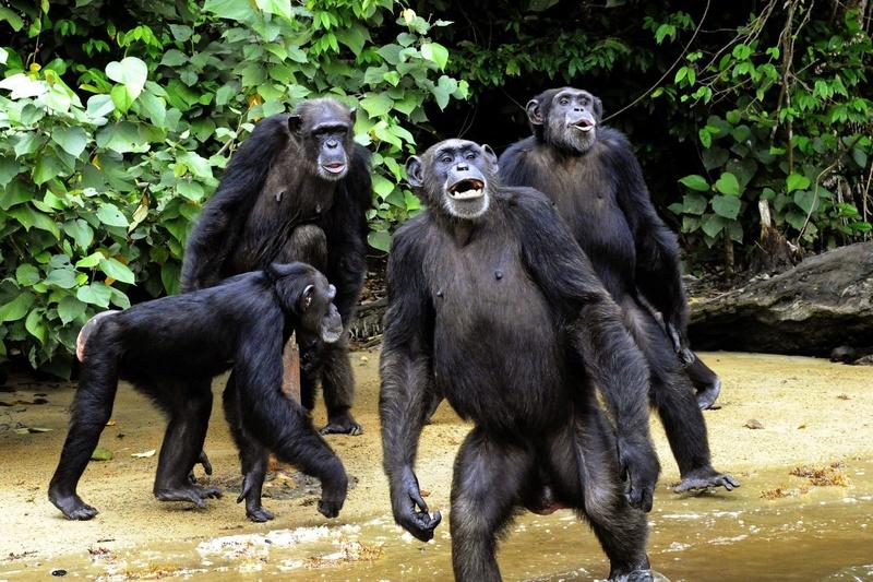 Du temps où on était des primates compétiteurs... Photo-10