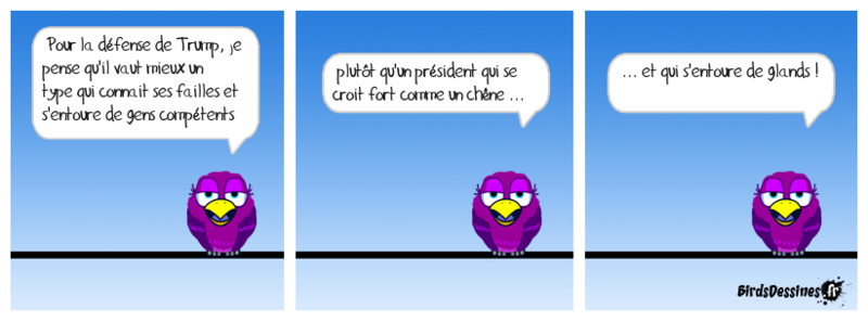 L'actu des Birds, début Novembre Sittel10