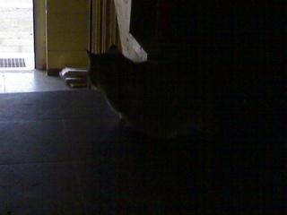Katze kommt - werde ich rückfällig? 09122010