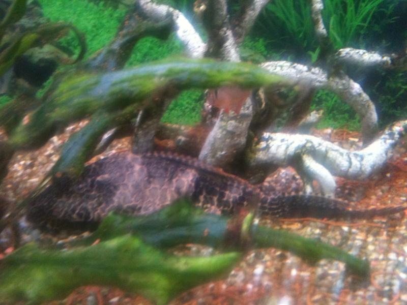 probleme aquarium Img_0112
