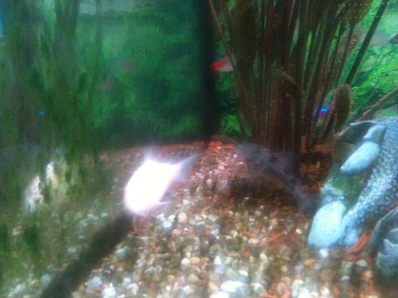 probleme aquarium Img_0113