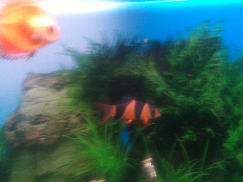 probleme aquarium Img_0114