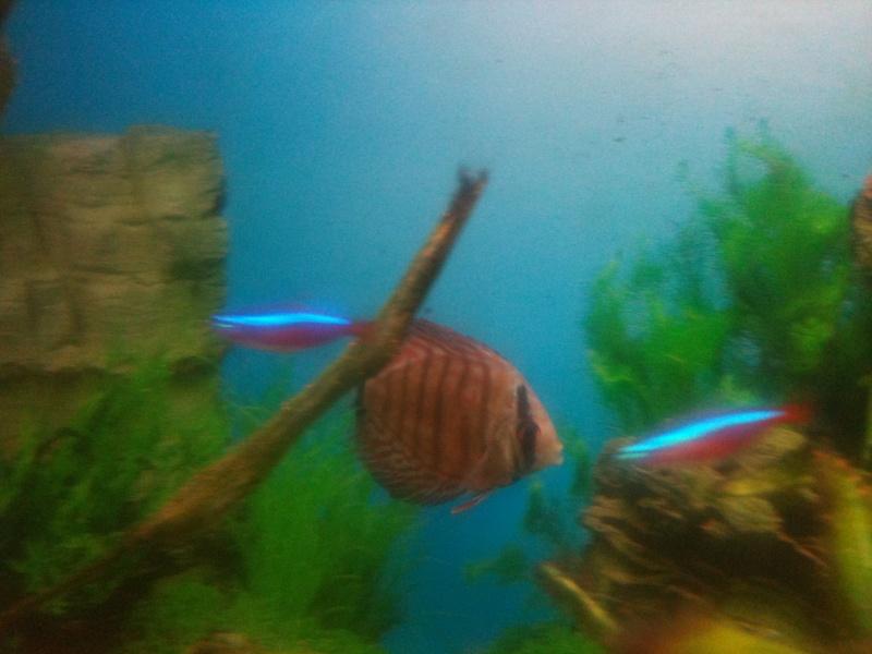 probleme aquarium Img_0117